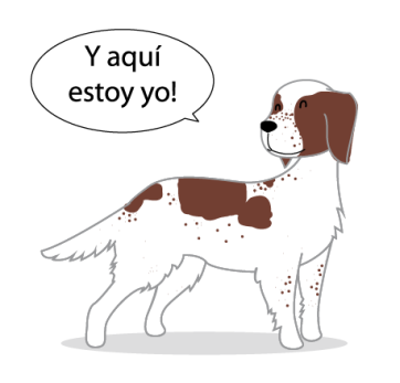 raza perro setter spaniel